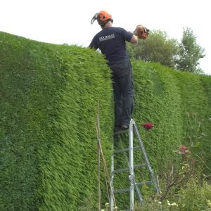 hedging-trimming